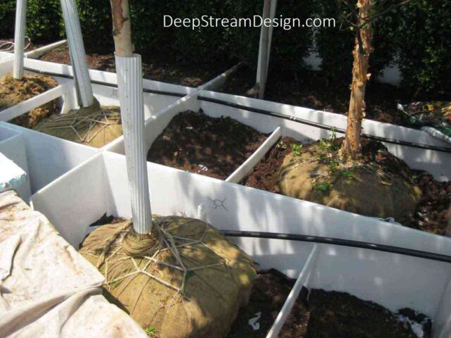 A Custom Welded Modular Planter Liner with hidden drainage and drip irrigation for a large commercial roof deck landscaping installation holding partially planted trees and bushes.
