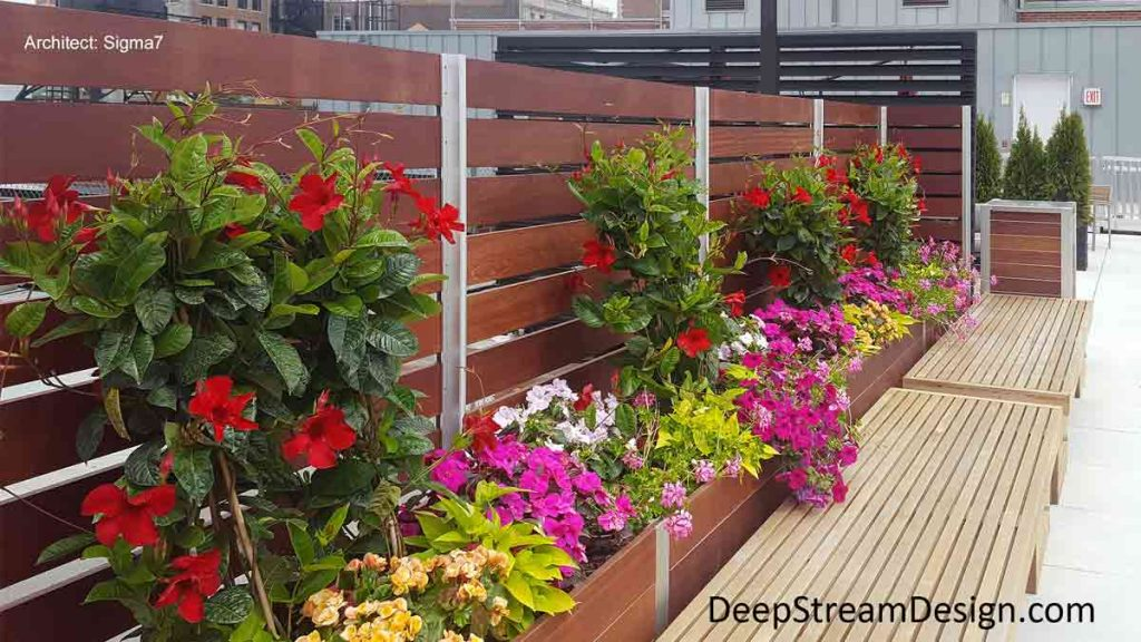 Multi-section commercial Mariner Wood Planters anchor a wood privacy screen wall, covered with beautiful flowers, on an urban roof deck