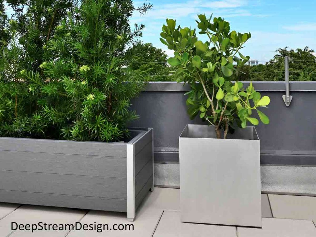 """A 24"""" natural silver-grey cube shaped Aluminum Restaurant Planter planted with a Clusia on a roof deck dining area next to a rectangular slate-gray recycled plastic and aluminum planter filled with bright green Podocarpus bushes."""