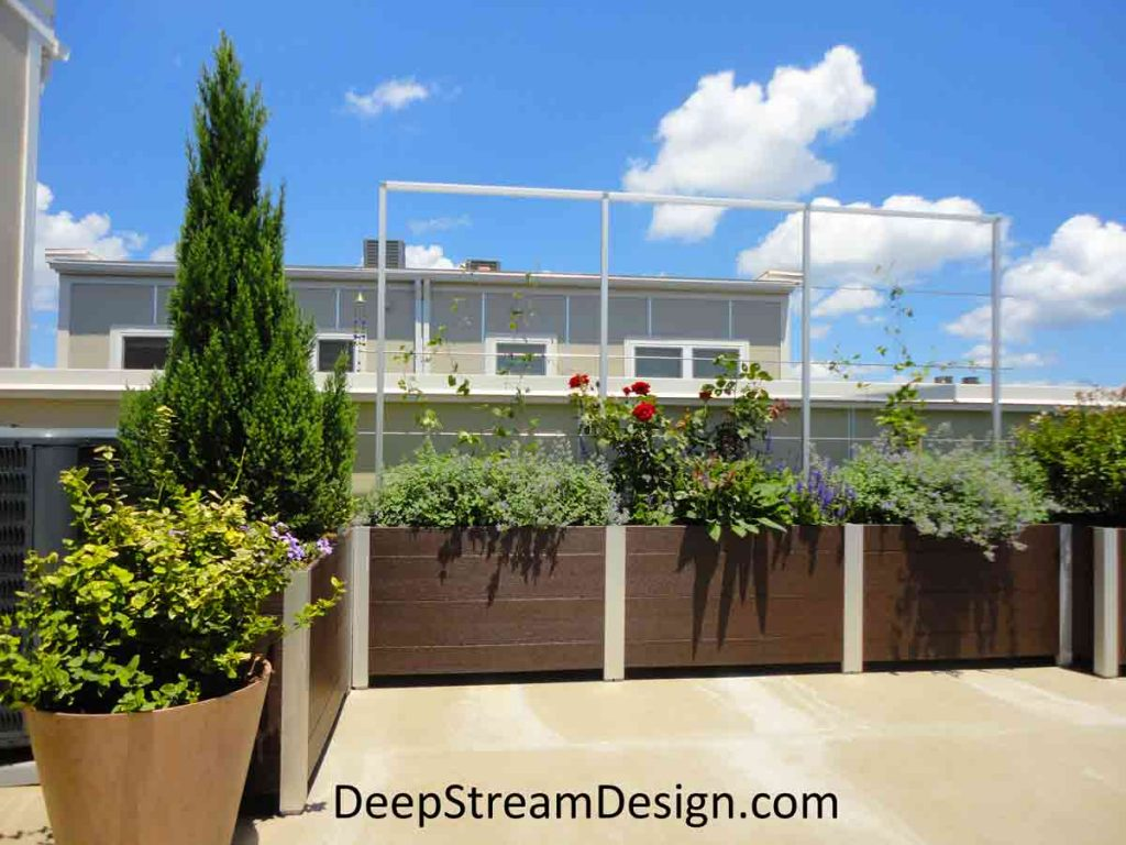 Modern modular multi-section Ipe brown recycled plastic lumber commercial planter with a stainless-steel rod trellis with vines, roses and bushes on a residential roof deck creates a privacy screen to block the view of neighbor's house.
