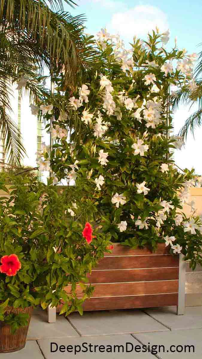 In full bloom, a Modern Wood Garden Planter with Trellis made with Jakob 316-stainless steel mesh and aluminum Trellis uprights on a penthouse roof terrace shows how vines have grown up the mesh to create a natural privacy screen wall fully engulfed in white flowers.