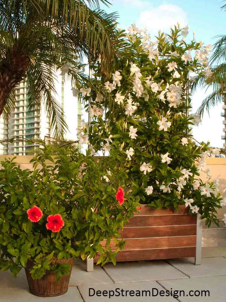 Commercial Wood Planters with one of several Trellis Options covered in a white flowering vine on a tropical urban roof deck with palm trees and red hibiscus.