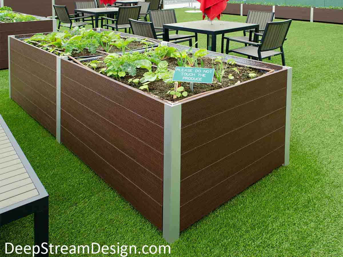 Large Long Wood Garden Planters crafted from Ipe brown recycled food safe plastic lumber with food safe LLDPE liners growing produce set among the tables of a farm-to-table restaurant's outdoor roof terrace dining area.