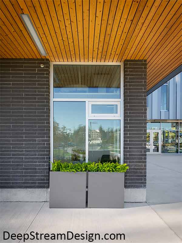 Modern large square cube aluminum planters with slate grey powder coating planted with bright green ferns accent modern architecture and tall windows of a modern gray brick building with natural wood clad overhangs.