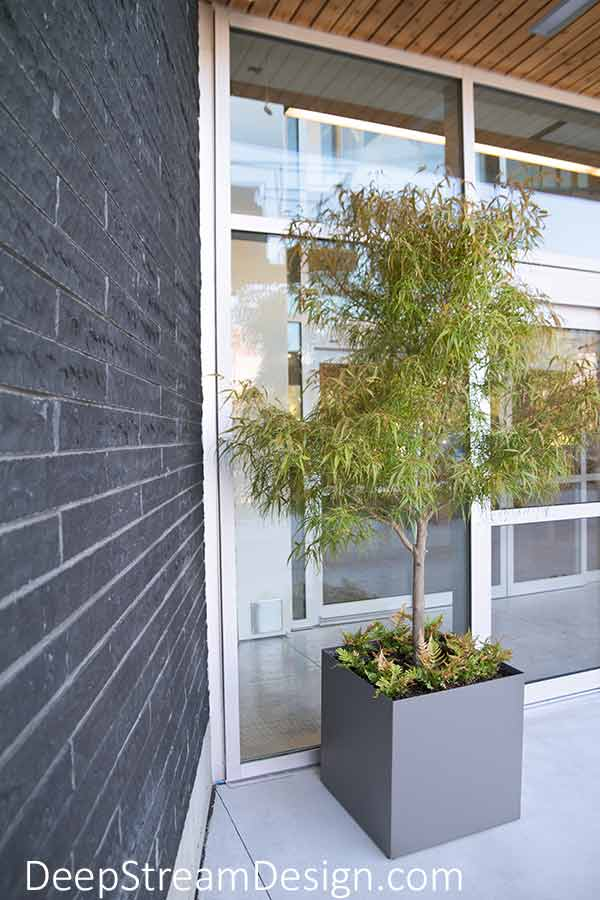 Modern square cube aluminum planters with slate grey powder coating planted with trees accent modern architecture and tall windows at the entrance of a modern gray brick building.