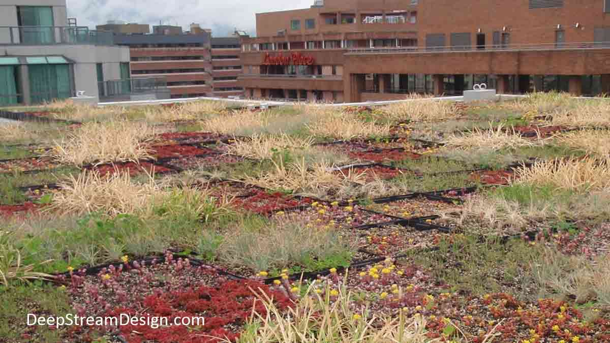 An expansive urban commercial Green Roof landscaped using Tournesol GRT3 Modular Green Roof HDPE UV-resistant plastic trays which hold engineered soil and plants.