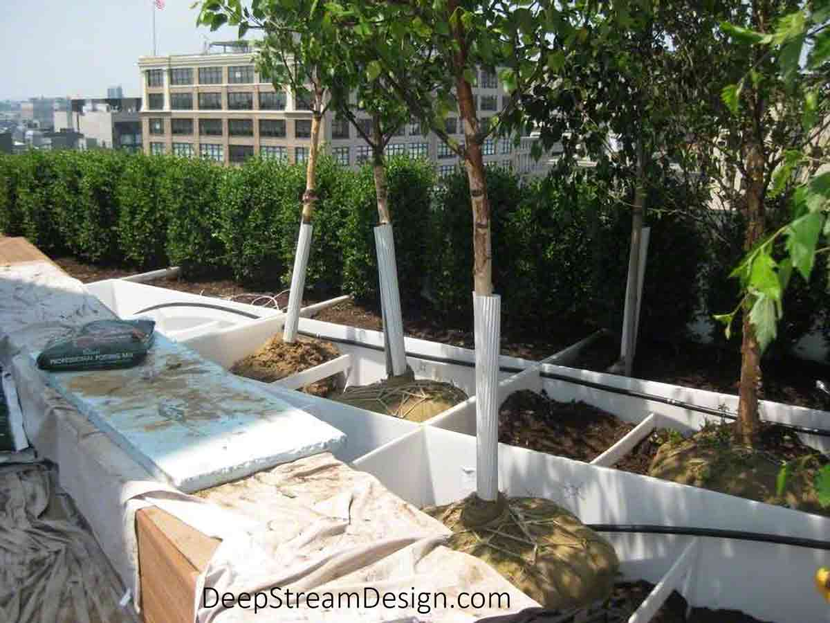 A Large Planter for Trees using modular custom welded planter liners is shown partially planted with a half dozen trees already in place high up on an urban roof terrace.