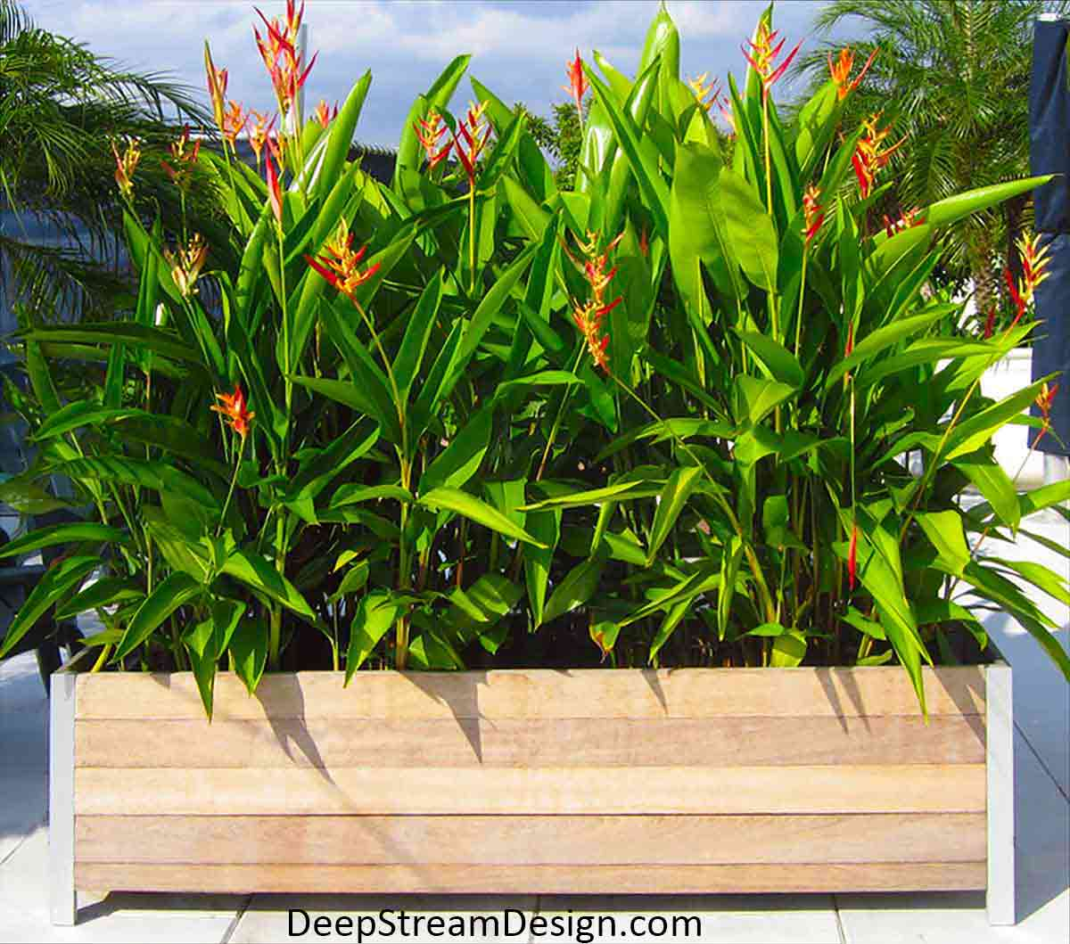 Large Wood Garden Planters on a tropical roof terrace landscaped with tall bright green Birds of Paradise with bright red and orange flowers.