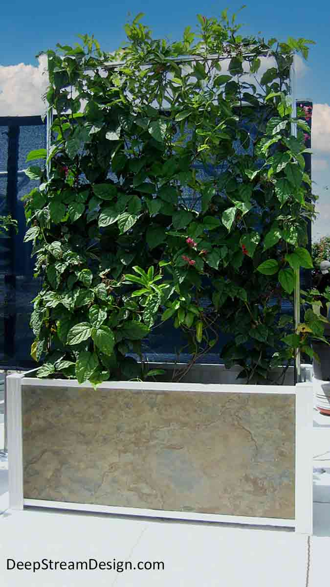 """A Modern Planter with a stainless steel trellis on a roof deck is covered with a healthy dark green vine and """"Bleeding Hearts"""" flowers making it a practical screen wall for privacy and hiding equipment. Crafted with natural slate panels held by DeepStream's proprietary Audubon anodized aluminum frame that supports an internal planter liner which provides proper irrigation while hiding drip irrigation lines, these modern planters provide ideal growing conditions."""