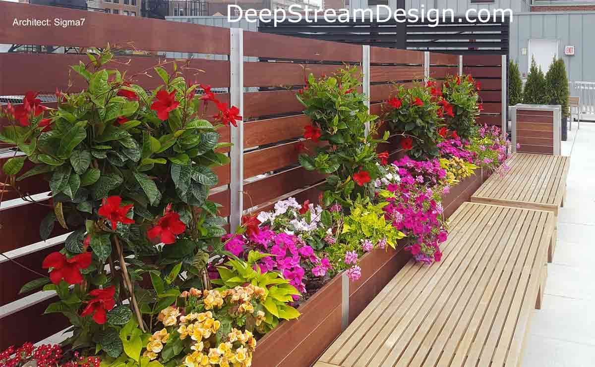 Privacy Screen Wall on an urban roof deck anchored by planters landscaped with colorful flowers and vines with bright red flowers creating a living wall.