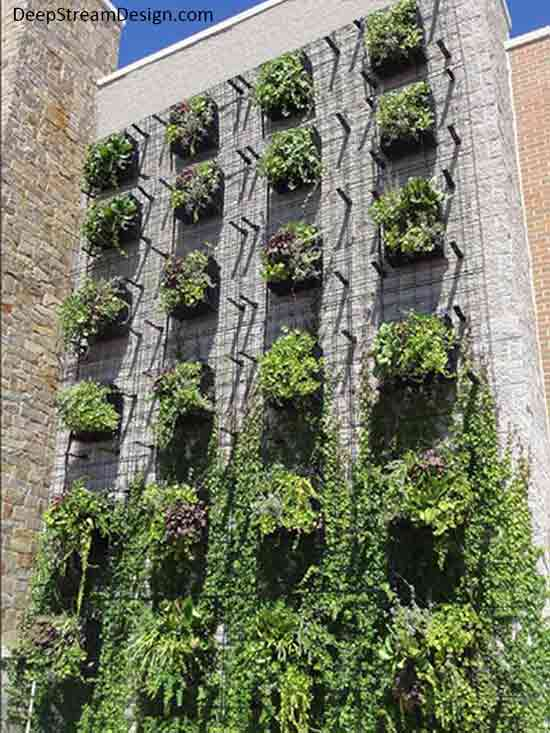 Taking a Vertical garden to new heights to create a live green wall with ridged trellis panels. Equally spaced planters, 6 rows high by 4 rows wide, are mounted with specially engineered brackets to a tall, otherwise blank natural light stone wall. The rigid 3-dimension trellis panels in between planters allow green vines to cover the entire green wall with a vertical garden, cooling the building with shade while protecting the stone surface.