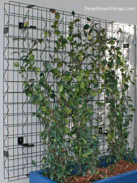 A Vertical Garden grows up through 3-dimension ridged wire Trellis panels creating a living green wall mounted to a white concrete wall. Vines grow up and out of a blue fiberglass planter at the bottom, reaching for the sun and winding themselves securely up through the Trellis.