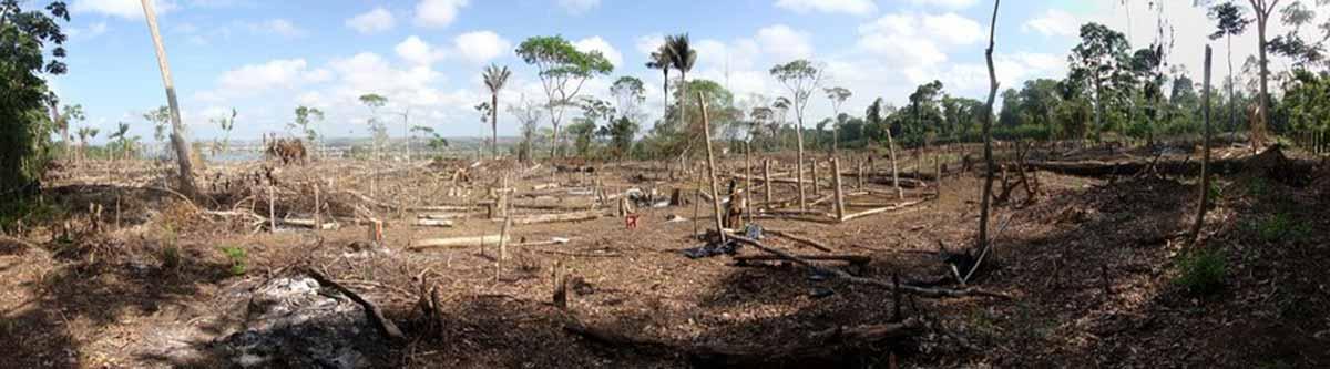 Slash and Burn Rainforest Destruction after Illegal Logging