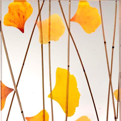 Studio photo of a sample of 3-form Gingko Thatch Varia Ecoresin Panel showing bright yelllo and orange harvested Ginko leaves and thin bamboo like reeds embed in a clear resin.